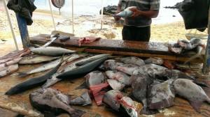 Georgetown Fish Market